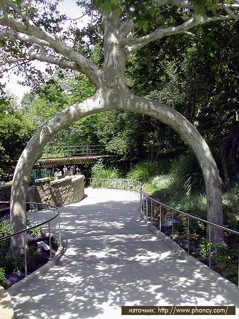 c36b95f853b3 На 8 място е едно невероятно по размери и възраст дърво Гигантската Секвоя