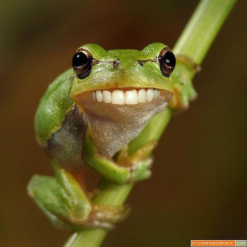 Frog_5