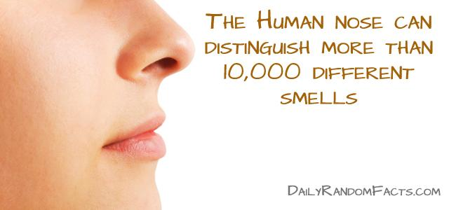 Random-facts-Human-Nose-copy