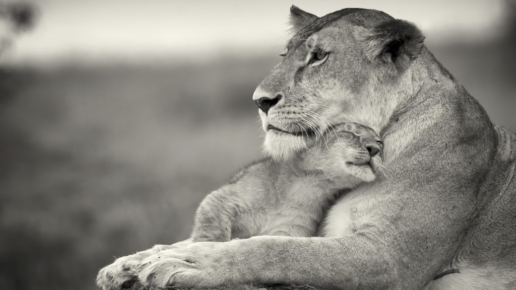 mothers-love