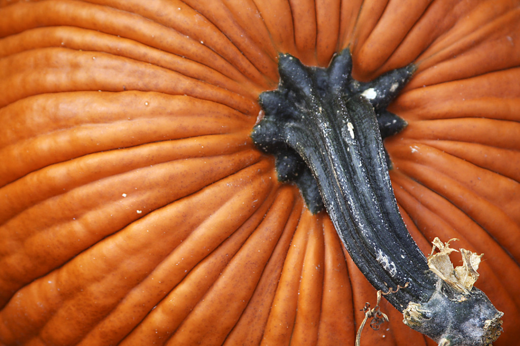 pumpkindetail